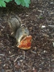 I+have+a+folder+for+pictures+of+squirrels+eating+pizza+_411f296529207463e466f9581bb0a46a